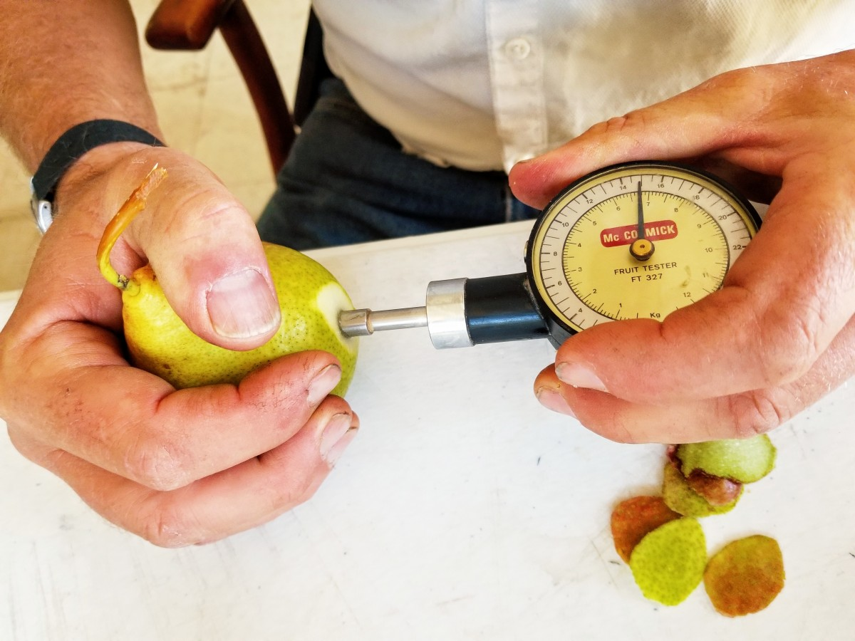 Pear Pressure